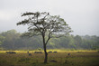 Animals graze on the plains in Arusha National Park in winter; Arusha, Tanzania
