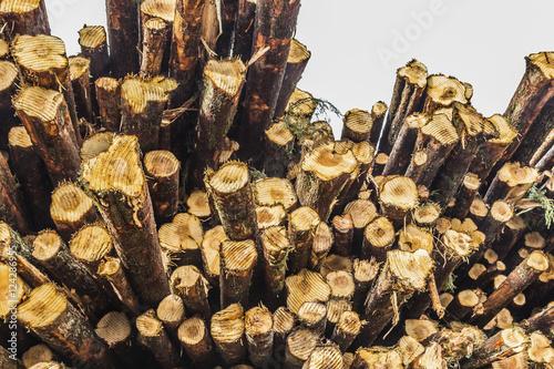 A pile of logs; British Columbia, Canada