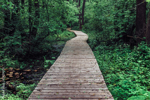 Fotobehang Weg in bos Wooden pathway among deciduous forest