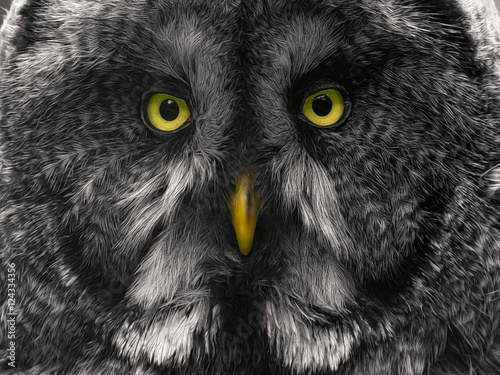 Acrylic Prints Close-up of a Great Grey Owl