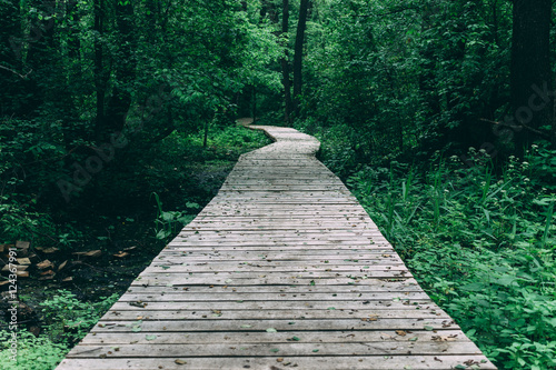 Wooden pathway among deciduous forest Canvas Print