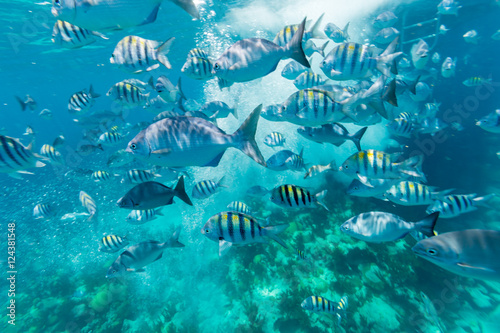 Underwater from Bermuda Island Canvas Print