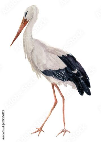 Bocian akwarela. Ciconia ptasia ilustracja odizolowywająca na białym tle. Do projektowania, wydruków lub tła