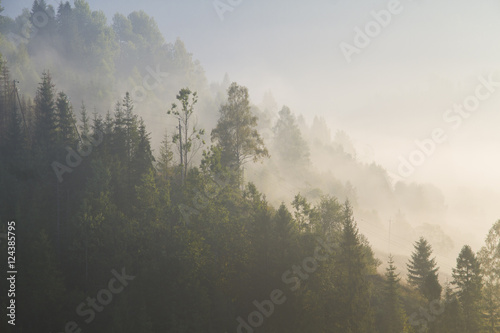 Autocollant pour porte Kaki at morning dawn mist over forest in mountains