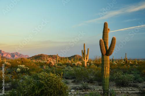 In de dag Cactus Cactus
