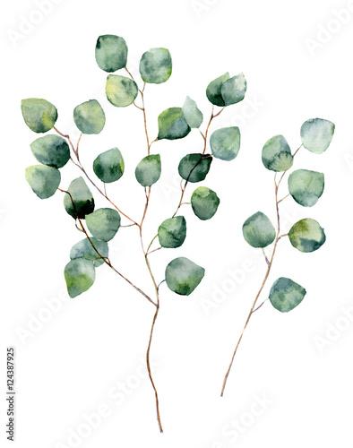 akwarela-srebrny-dolar-eukaliptusa-z-okraglymi-liscmi-i-galeziami-recznie-malowane-elementy-eukaliptusa-kwiecista-ilustracja-odizolowywajaca-na-bialym-tle-do-projektowania-tekstyliow-i-tla