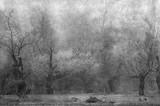 Sztuka grunge krajobraz pokazuje przerażający stary las na chmurnej jesieni - 124397572