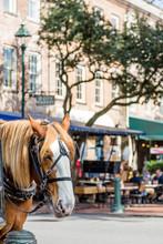 Horse In City Market
