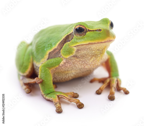 Tuinposter Kikker Green frog isollated.