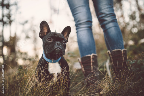 Foto op Plexiglas Franse bulldog Adorable French bulldog puppy nature outdoors. Dog sitting in deep forest grass.
