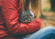 Gray Cat Homeless And Woman Hugging Outdoor Lifestyle And Friendship Helping Concept