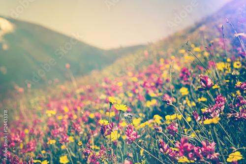 Blooming Flowers in mountains valley alpine Spring Summer seasons natural Backgr Wallpaper Mural