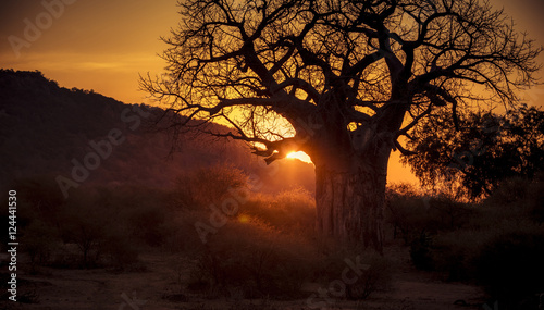 Sunset on the Plains of Africa with Giant Baobab Tree and Other