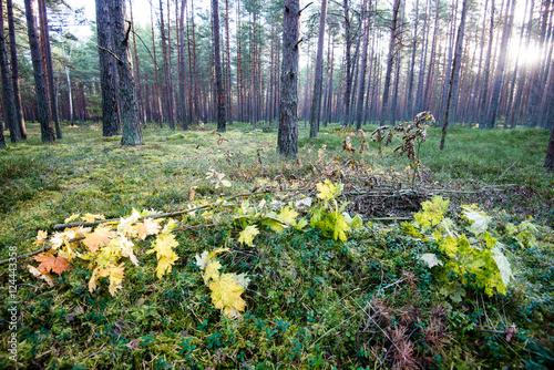 Fotobehang Zwavel geel autumn colored forest trees