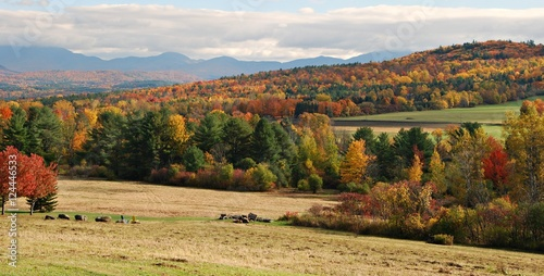 Poster Heuvel Full Autumn Colors in Vermont