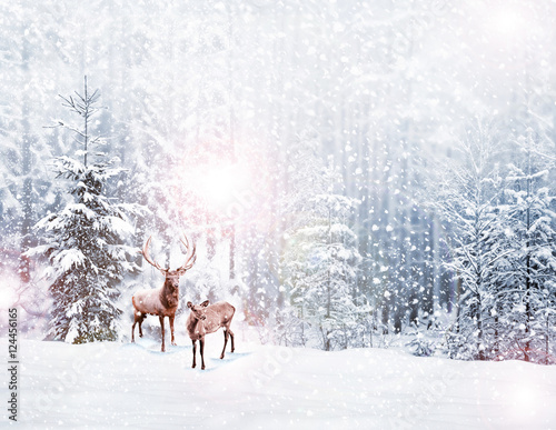 Fotobehang Hert forest in the frost. Winter landscape. Snow covered trees. deer