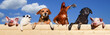 Leinwandbild Motiv Lustige Haustiere hängen auf einem Bretterzaun, Banner