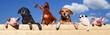 Leinwandbild Motiv Gruppe von Haustieren schaut über eine Bretterwand, Banner