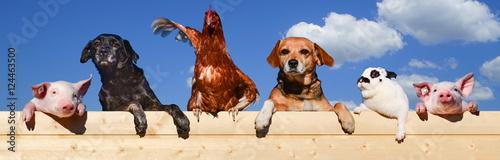 Gruppe von Haustieren schaut über eine Bretterwand, Banner Wallpaper Mural