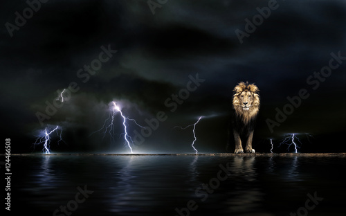 Thunderstorm Portrait of a Beautiful lion, lion in the dark