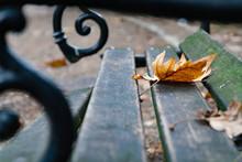Leaf In Autum