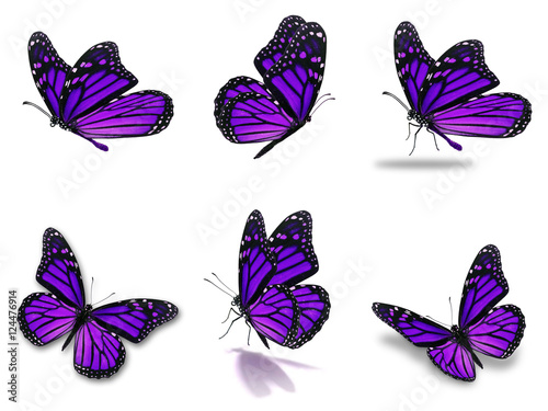 monarch butterflies set
