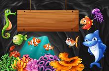Sea Animals Swimming Around Wo...