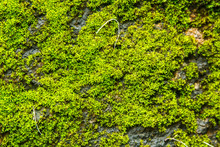 Moss Covered Rock Background And Texture