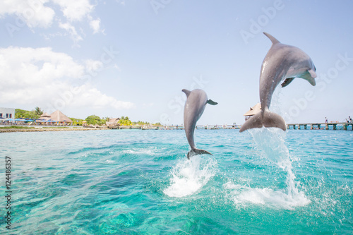 Obrazy Delfiny two-dolphins-jumping-from-the-ocean