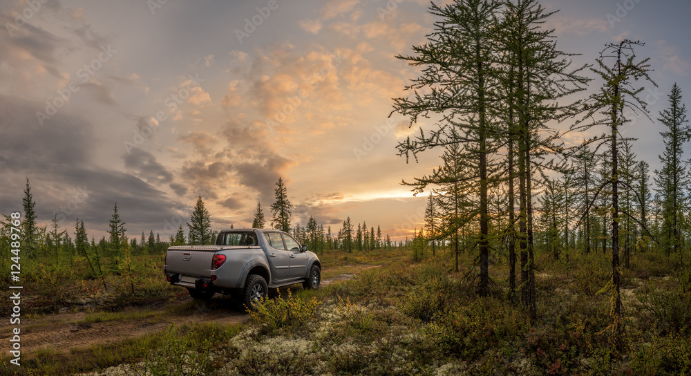 Fototapety, obrazy: Car in the forest