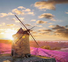 Windmill With Levander Field A...