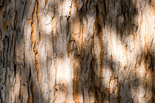 Canvas Prints Textures Shades and light on an old tree trunk