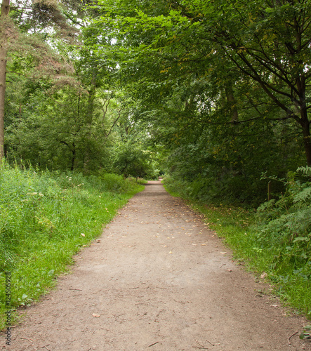 Foto op Canvas Weg in bos Perspective down the forest path