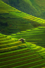 Fototapeta Do gastronomi Terraced rice field in Mu Cang Chai, Vietnam