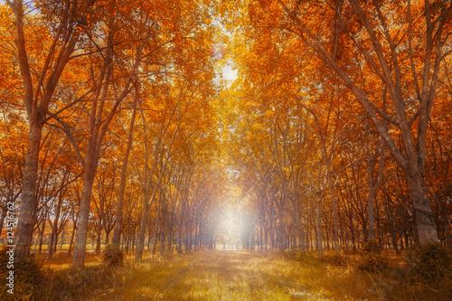 Papiers peints Forets Forest in autumn season