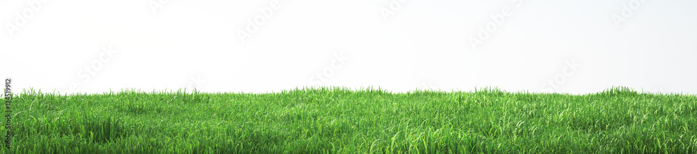 Fototapeta Field of soft grass, perspective view with close-up