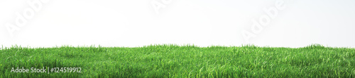 Obraz Field of soft grass, perspective view with close-up - fototapety do salonu