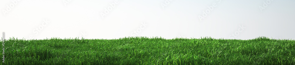 Fototapety, obrazy: Field of soft grass, perspective view with close-up