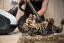 Cleaning Cat With Vacuum Cleaner Low Angle View
