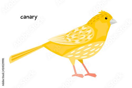 Fotografia  Image of nice canary