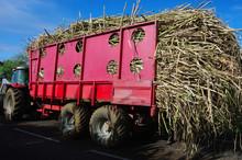 La Réunion - Récolte De La Canne à Sucre
