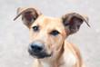 Dog headshot outside - Pets Care Consept
