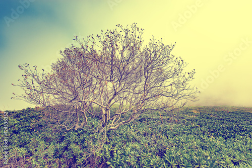 Printed kitchen splashbacks Khaki Lonely trees in the mountains at foggy morning time between rhododendron bushes.