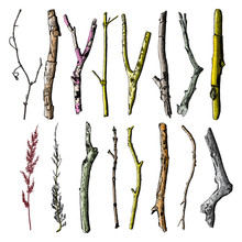 Hand Painted Wood Twig Set, Ink Rustic Design Elements Collection. Dry Wood Tree Branch And Wooden Twig Bundle. Detailed And Precise Watercolor Imitation Driftwood Twigs Set.