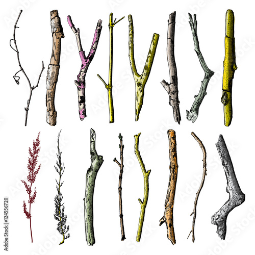 Foto Hand painted wood twig set, ink rustic design elements collection