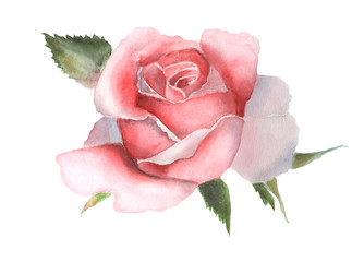 Panel Szklany Róże Watercolor pink rose on white handmade drawing.