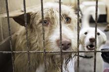 Kennel Dogs Locked