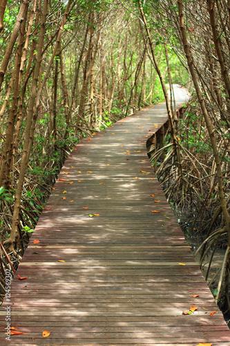drewniany-most-w-lesie-namorzynowym