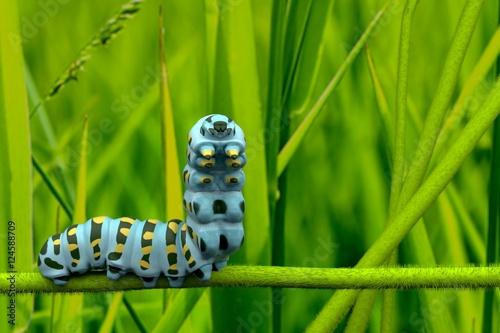 Fotomural caterpillar 3D