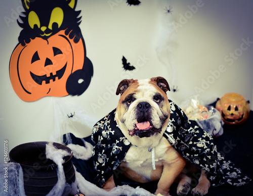 Fotografie, Obraz  Mago Buldogue no  Halloween